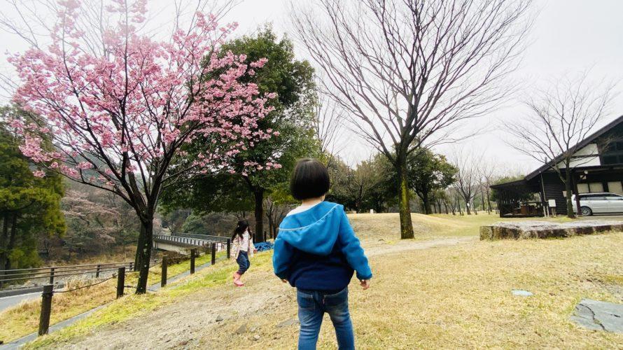 《子供と遊ぶ》身近にある自然物を探そう!2選
